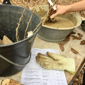 Pralinage des racines nues